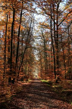 Herfst in het Schönbuch-bos van Tobias Majewski