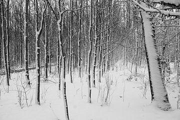 Jong Bos in de winter van Pieter van Dijk