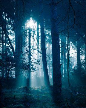 Mysterieus bos van Rudmer Hoekstra