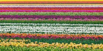 Wunderschöne Blumen bei Egmond aan Zee von Frans Lemmens