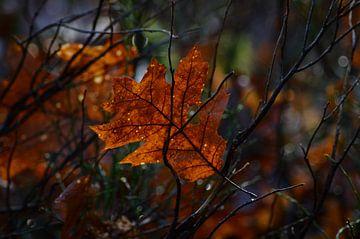 Sonnenlicht auf einem Herbstblatt von Joyce Derksen