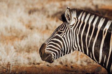 Zebra || Safari, Art Print, Zuid-Afrika || Kruger Nationaal Park