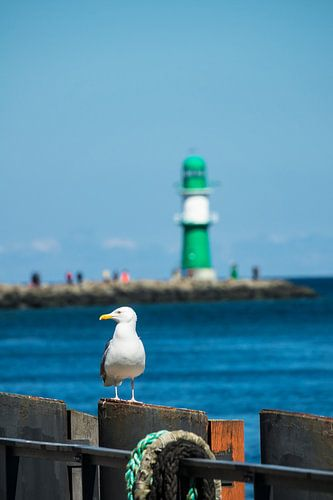 Mole and seagull in Warnemuende