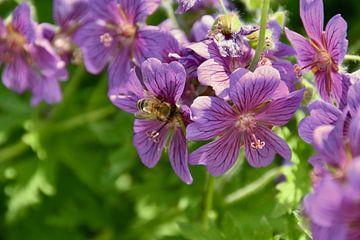 Blumen und Bienen von Myrthe Visser-Wind