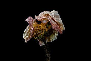 Stillleben getrocknete Blume