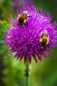 Fleißige Bienen von Esther's Photos