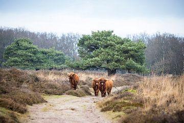 Schotten aan de wandel van Meint Brookman