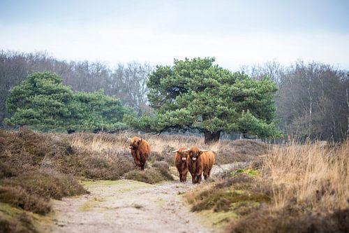 Schotten aan de wandel