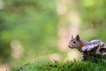 Hé daar! Eekhoorn van T de Smit