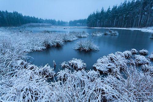 Snowy swamp