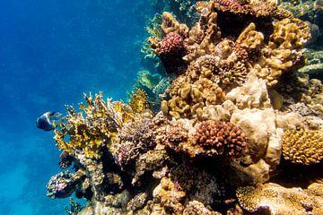 grillig koraal van John van Weenen