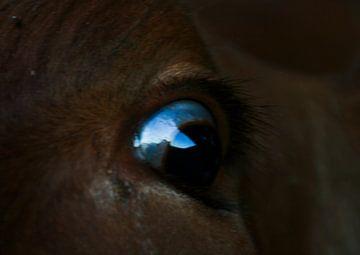 a cow's eye von pam van der Linde