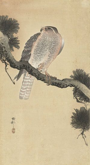 Havik op pijnboomtak van Ohara Koson