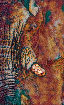 Loxodanta Africana von Joris Pannemans - Loris Photography