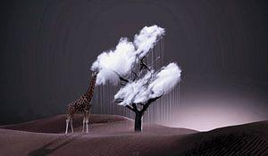 Le gout du nuage