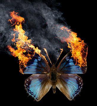 Brandende vlinder van Achim Prill
