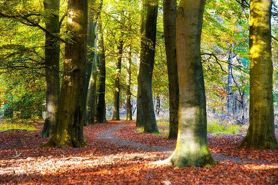 Herfstbos van Anouschka Hendriks