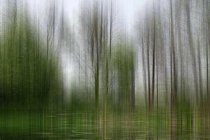 Spring Awakening in het laagland bos