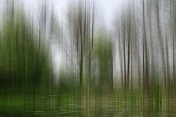 Spring Awakening in het laagland bos van Christine Nöhmeier