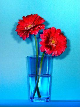 Rode bloemen op blauw van