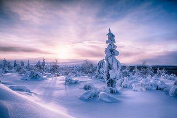Landschap van Zonsopkomst Finland