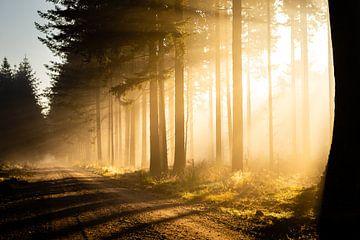 Zonnestralen in het bos op een mistige ochtend