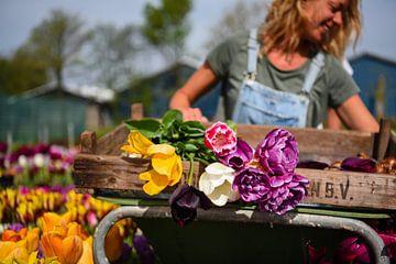 Werk in de tuin van Maartje Abrahams