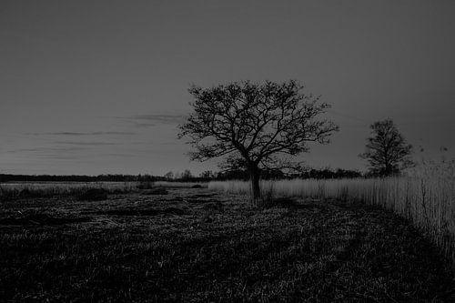 Karakteristieke boom aan de waterkat
