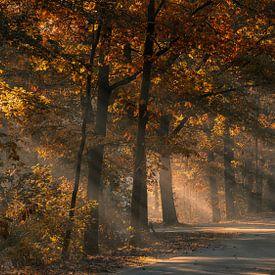Zonnestralen in het mistige herfstbos van Bram van Broekhoven