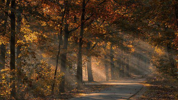 Zonnestralen in het mistige herfstbos