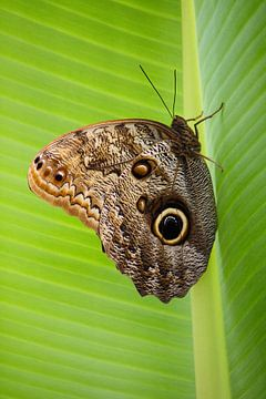 Vlinder van Tesstbeeld Fotografie