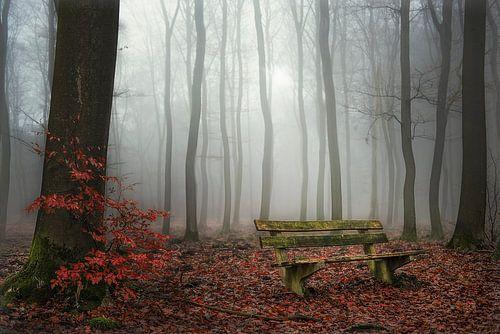 Forest fog... van