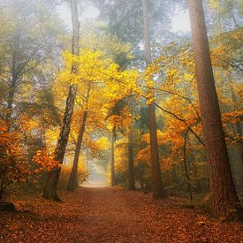 Foggy dream forest 2 van Saskia Dingemans