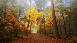 Foggy dream forest 2