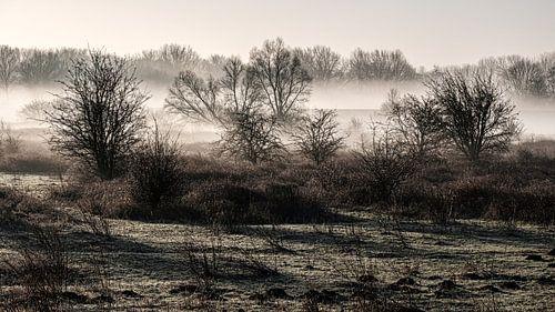 Een mooie mistige ochtend in Meinerswijk natuur park van Eddy Westdijk