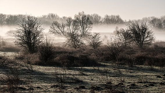 Een mooie mistige ochtend in Meinerswijk natuur park