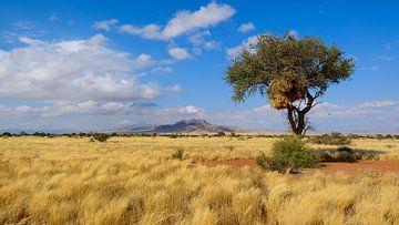 De uitgestrektheid van Namibië van Denis Feiner
