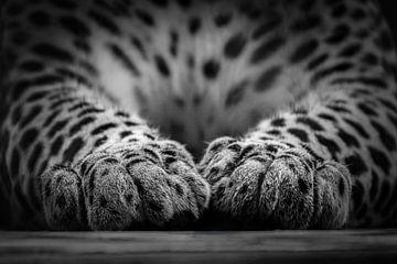 Sri Lanka Panther-Beine von Daphne van Dam