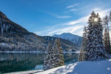 Die Sonne scheint durch die verschneiten Kiefern am Davoser See, Schweiz von Peter van Dam