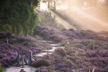 Magische Sonnenstrahlen Treppen und Weg in Heidekraut in voller Blüte von Dorota Talady