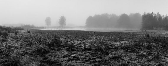 Misty Rondven