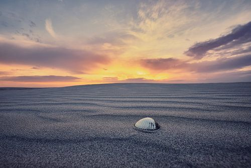 Sfeervolle foto van een schelp op het strand van