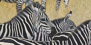 Zebras von Russell Hinckley