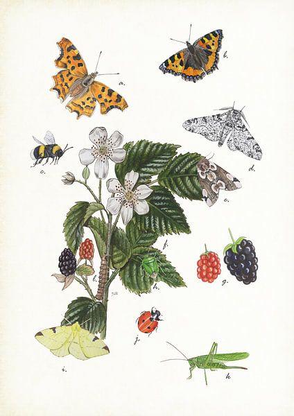 Braam met insecten van Jasper de Ruiter