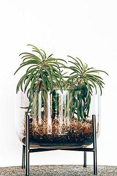 zoals palmbomen van Michael Schulz-Dostal