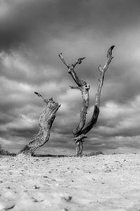 Dode kunst in de duinen