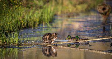 Cat & Ducks; als een vis in het water van piet douma