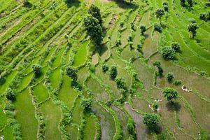 Reisfelder von oben II von Merijn Geurts