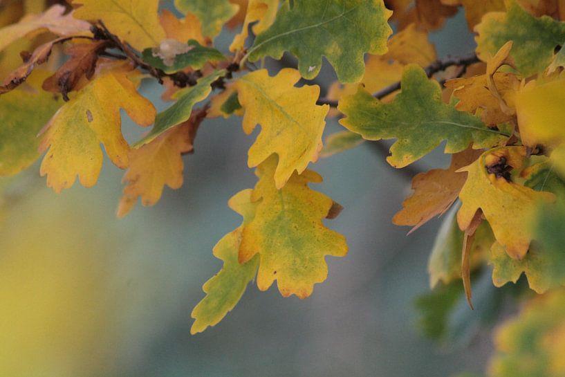 autumn van ines meyer