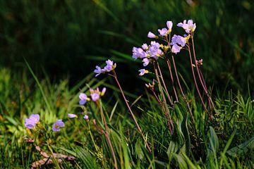 Pfingstblüte von Erik Koole